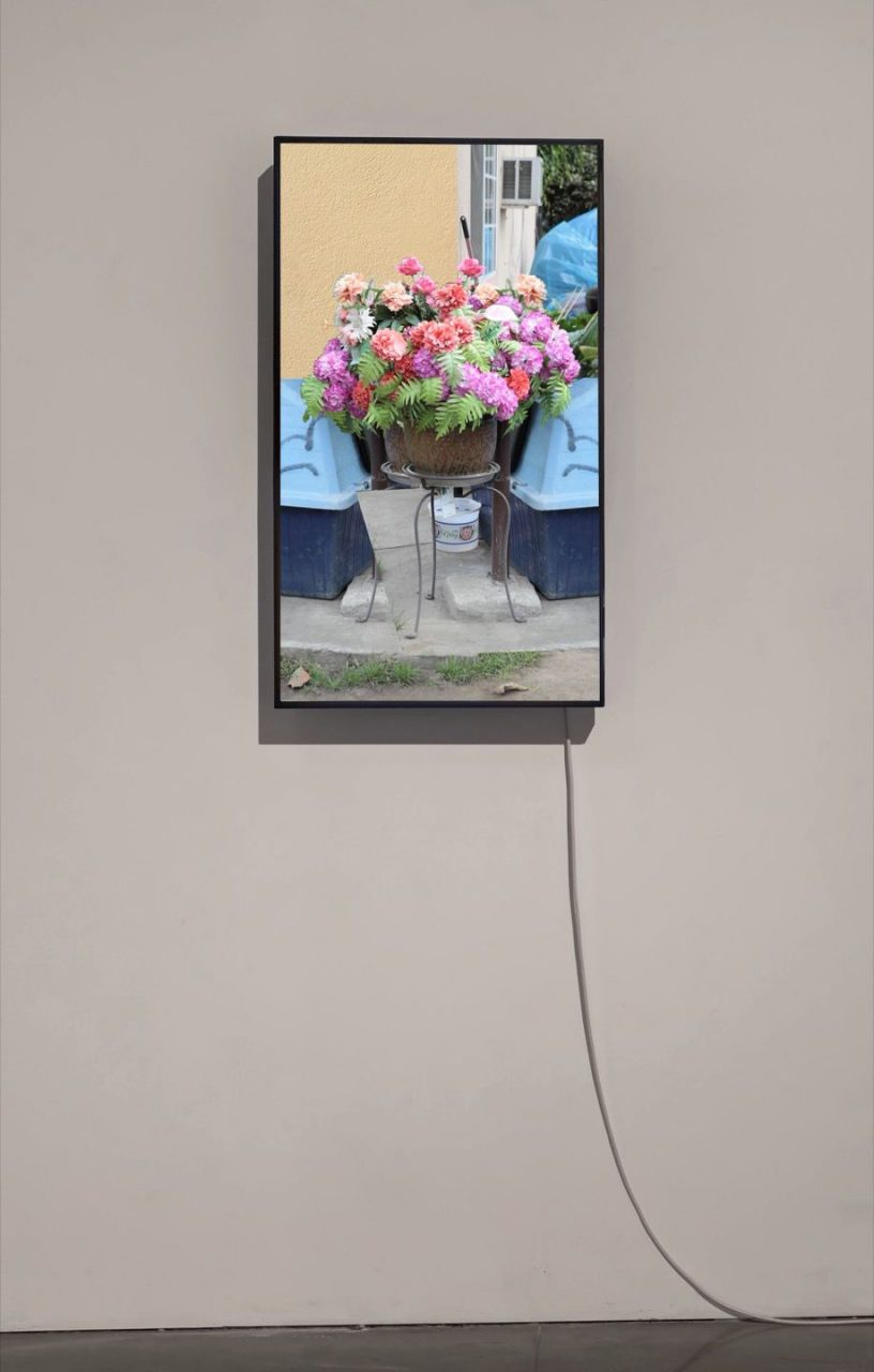 Color Shift | Two-Way Polyester Flowers (For L.B.), 2012